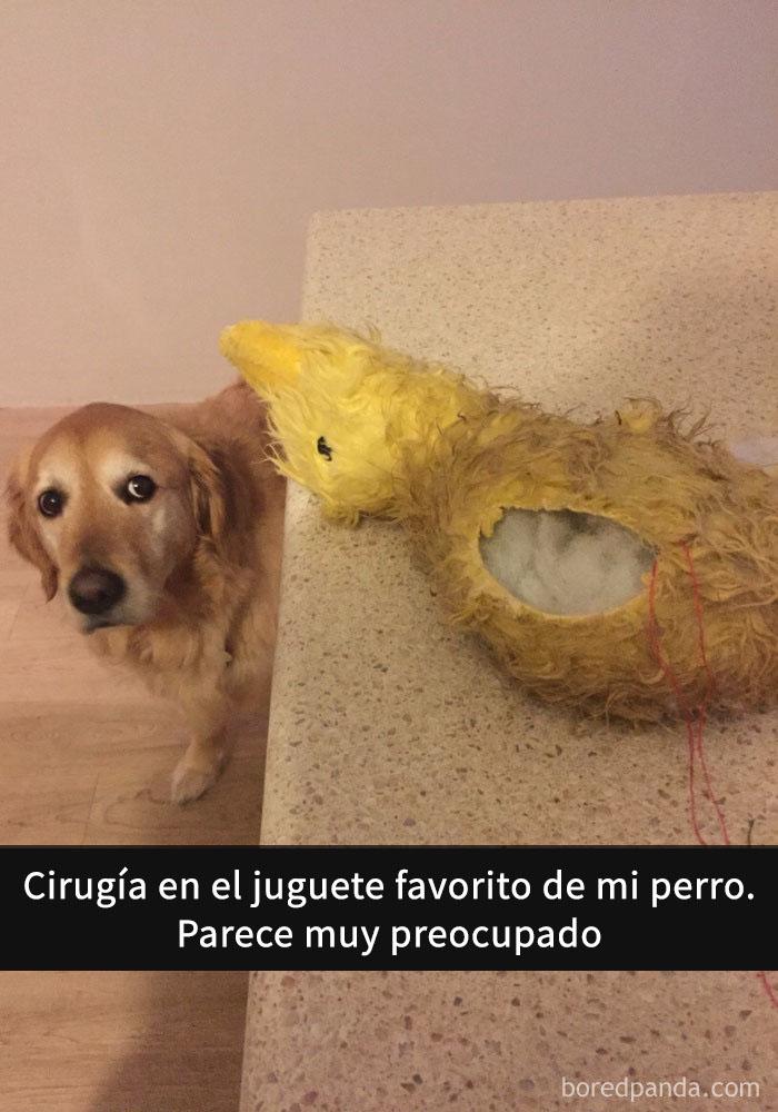 perros snapchat 10