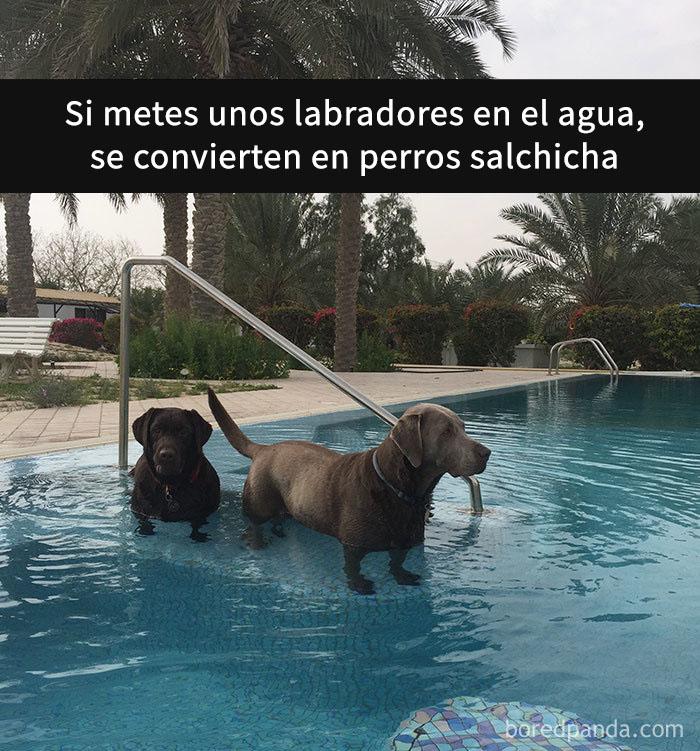perros snapchat 3