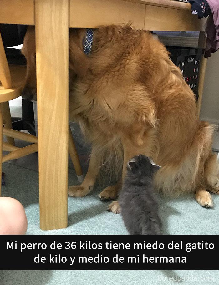 perros snapchat 4