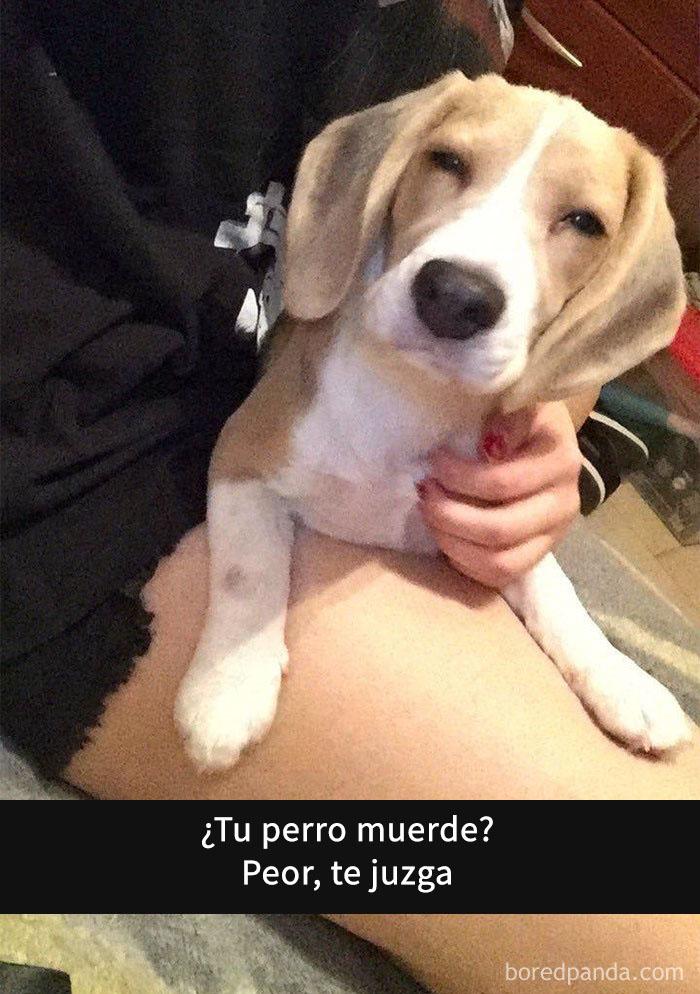 perros snapchat 5