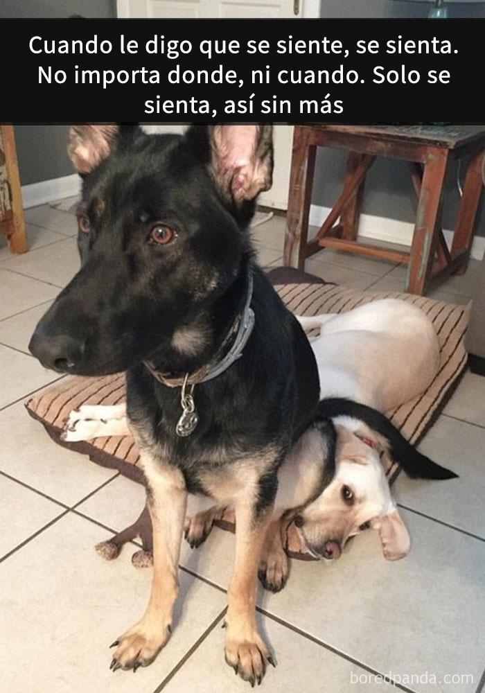 perros snapchat 6