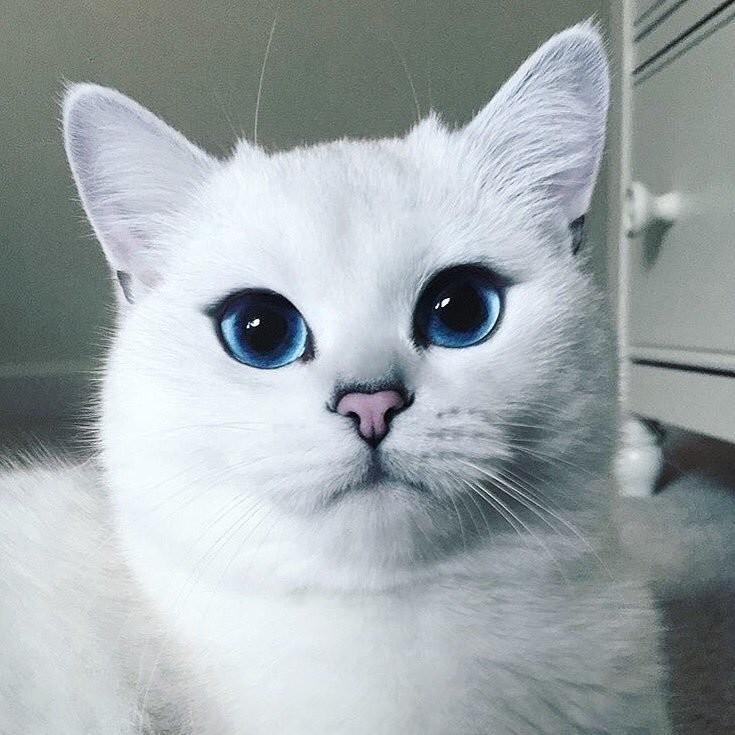 Te Mostramos Al Gatito Más Adorable Del Mundo - Via Ritmo